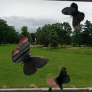 The Butterfly Type Plan - South Hill Park Arts Centre (2015)