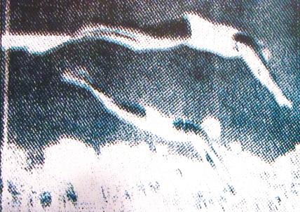 Divers Cropped - Silk Screenprint