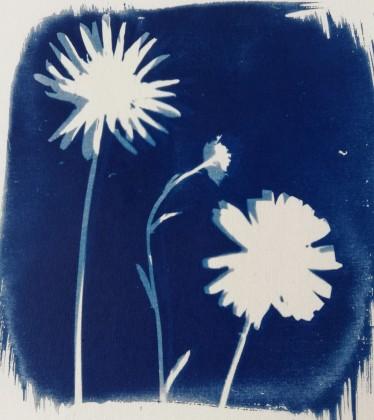 Cyanotype - movement