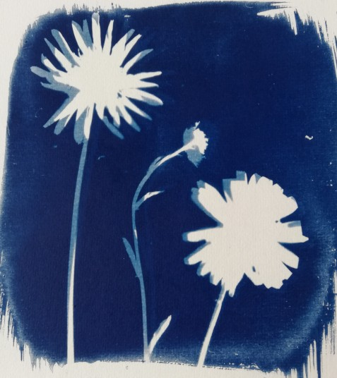 Cyanotype - movement