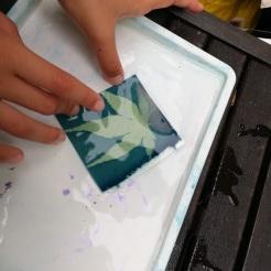 Cyanotype in the garden