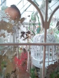 View through the glasshouse