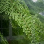 Fern - Looking through the window - West Dean Gardens 2020 Photography