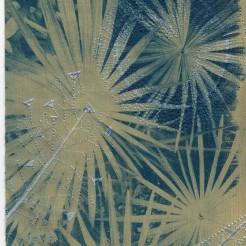 Cyperus alternifolius – Kew Gardens (2020)