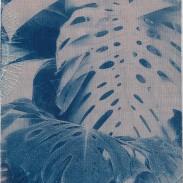 Monstera deliciosa Leaves I– Kew Gardens (2020)