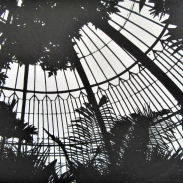 Palm House - Looking int to the Sky (2020)