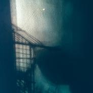 Caged Bird Photography